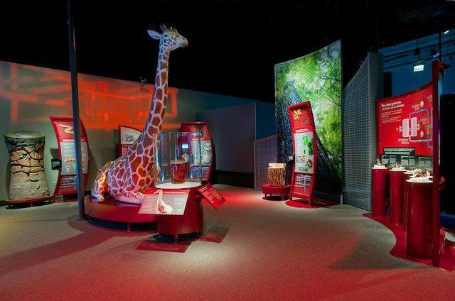 """The Machine Inside: Biomechanics,"" Memphis Pink Palace Museum"