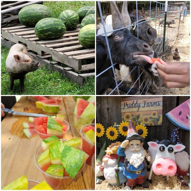 Watermelon Festival, Priddy Farms