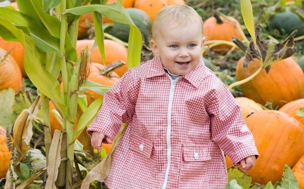 pumpkinpatch_DT_3321904.jpg