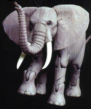 ElephantCashore.jpg