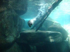 6-Otter at aquarium.jpg