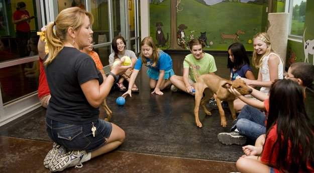 Junior KPAW kids discover animal care goes beyond playing with and grooming a pet.