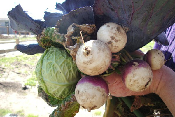 Harvesting2.jpg