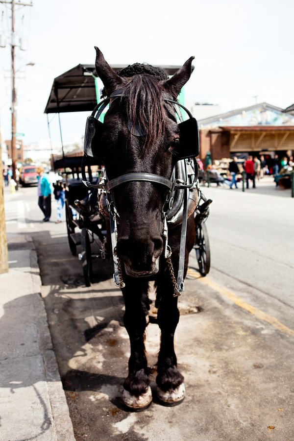 Want a carriage tour? Just head to the market area in the center of downtown.