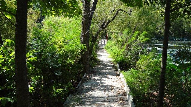 Lakeside trail with foliage.jpg