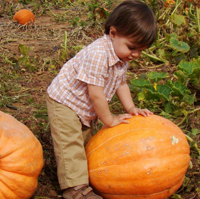 pumpkinkid.jpg