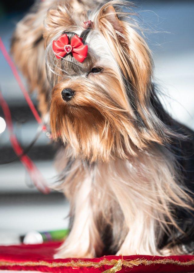 puppypageant.jpg