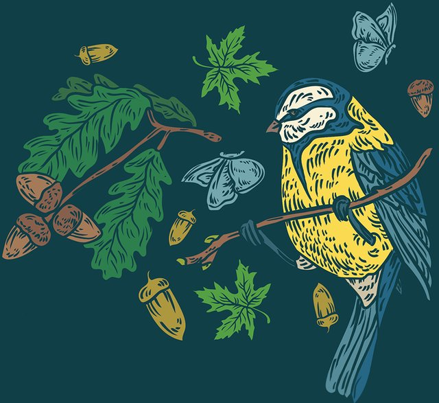 Birds & Seeds 4x6 no text.png