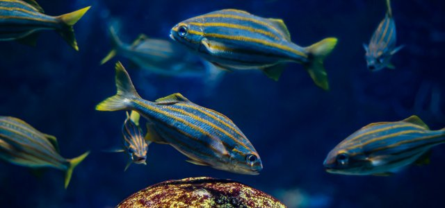 New England Aquarium.jpg