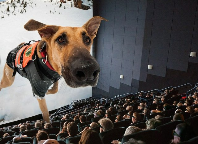 Superpower Dogs 3D, CTI Giant Theater