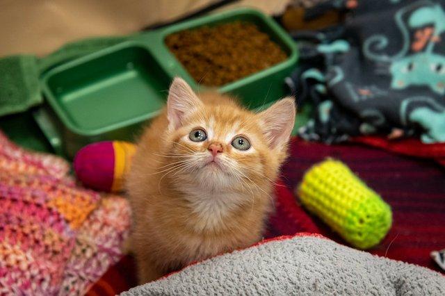 Kitten Shower, Memphis Animal Services