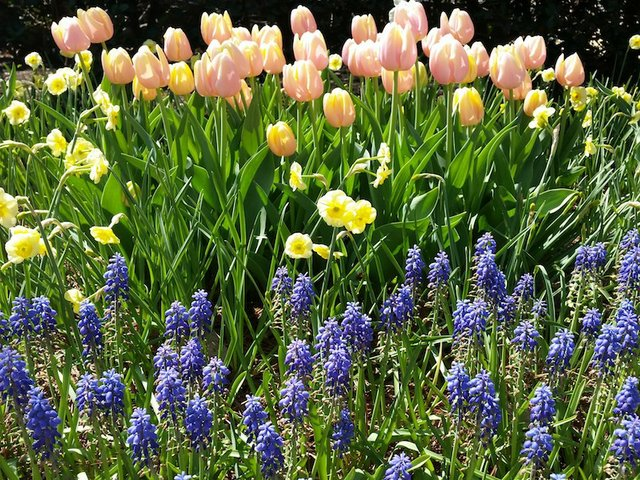 Spring Blooms at the Garden